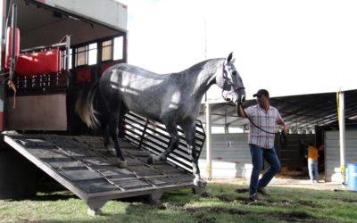 Toluca es sede del Festival Internacional del Caballo Lusitano. Foto: Cortesía.